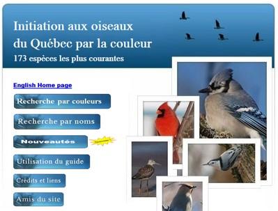 oiseauxcouleur